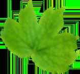 leaf-middle